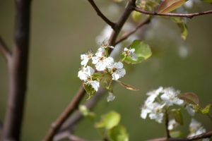 spring time, season, landscape, nature, flowered tree, white tree, nature, flowers, trees, summer