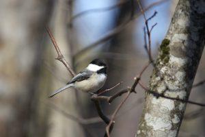 tiny bird, animal, trees, bird