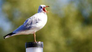 white seagull, bird wings, animal, avian, beautiful bird