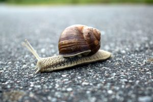 snail, shell, animal, asphalt, brown, spiral, road