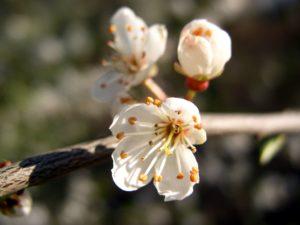branche, flore, fleur, fleurs, macro, nature