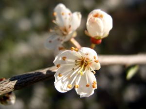 branch, flora, bloom, blossom, flowers, macro, nature