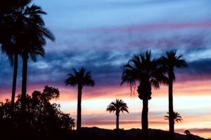 sky, sunrise, sunset, dusk, palm, trees