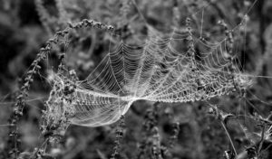 Spider web, web, felle