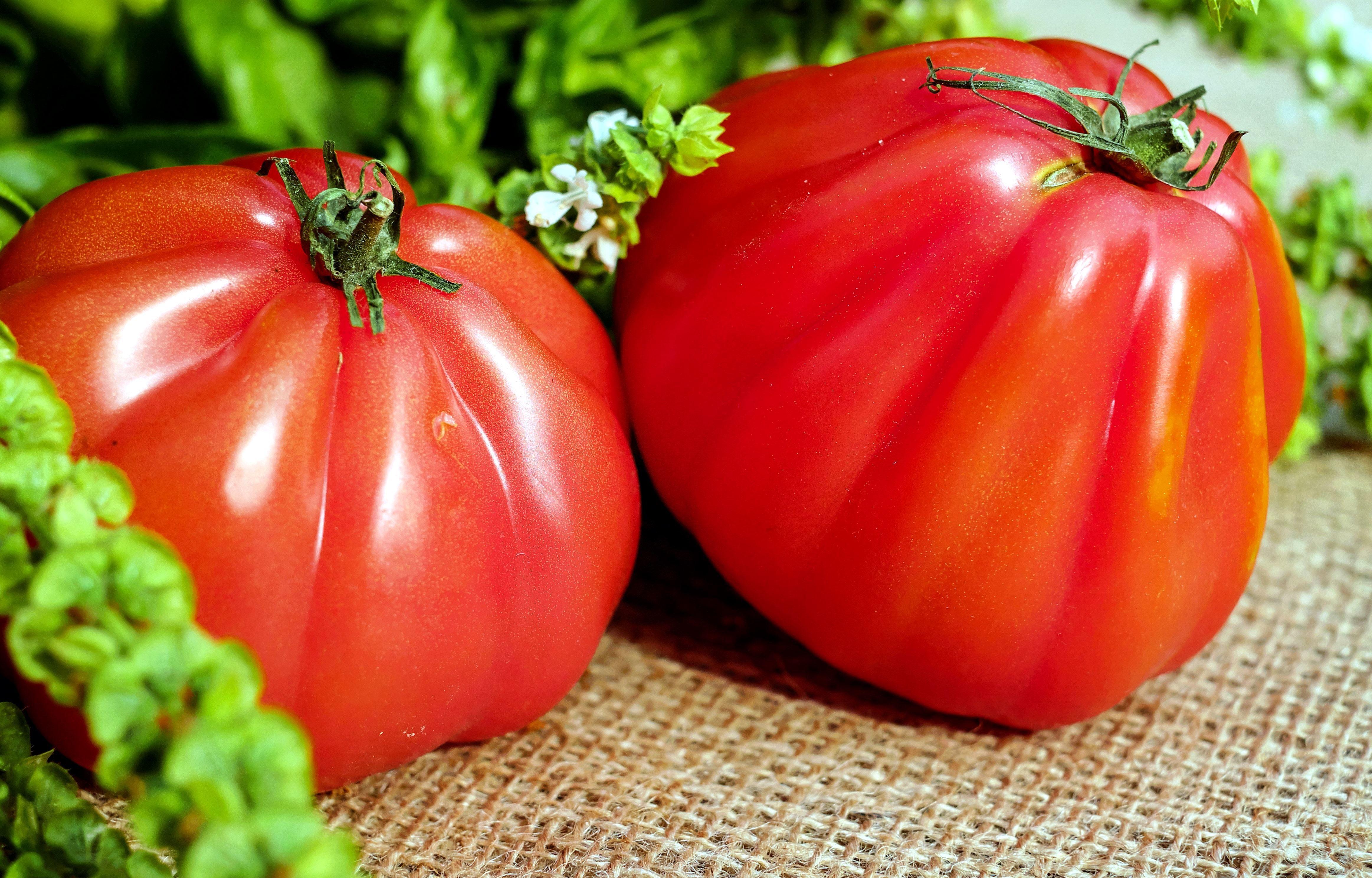 Бесплатное изображение: помидор, перец, растительное, сладкий перец, сладкий перец, питание, вегетарианские