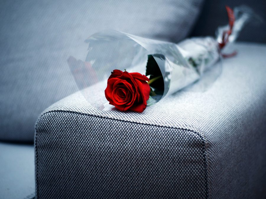 red rose, laying, sofa, Valentines day