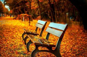 bench, autumn, park