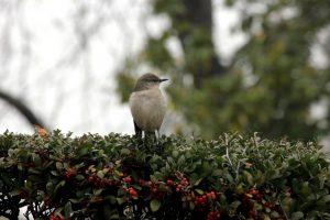 Vogel, schauen, Baum, Wald