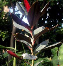 red, spiral plant, flora