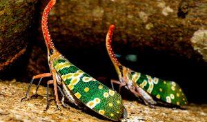 Cicada, côn trùng, vĩ mô ảnh