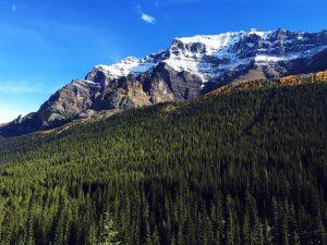 mountain, trees, beautiful, peak, valley
