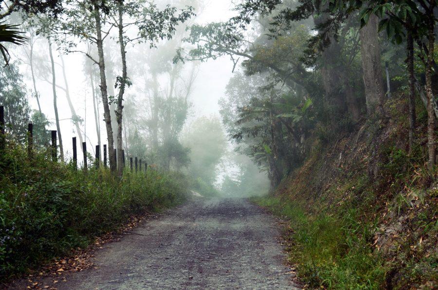 Road, träd, dimma, skog