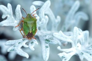 bug, leaf, flora, green insect