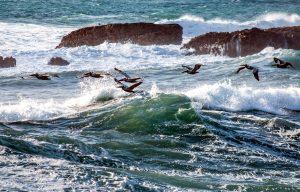 sea, waves, bids flying, ocean, rocks