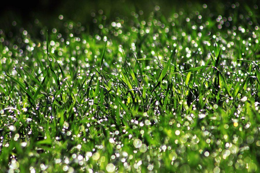 lawn, summer, wet field, freshness, droplet, green grass