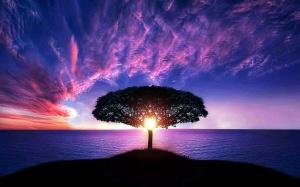 Sun, middle, tree, sunset over ocean, purple sky