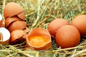 chicken eggs, cracked egg