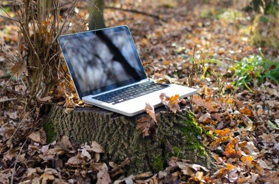 Herbst, Wald, Wirtschaft, Technologie, Wireless, Holz, Arbeit