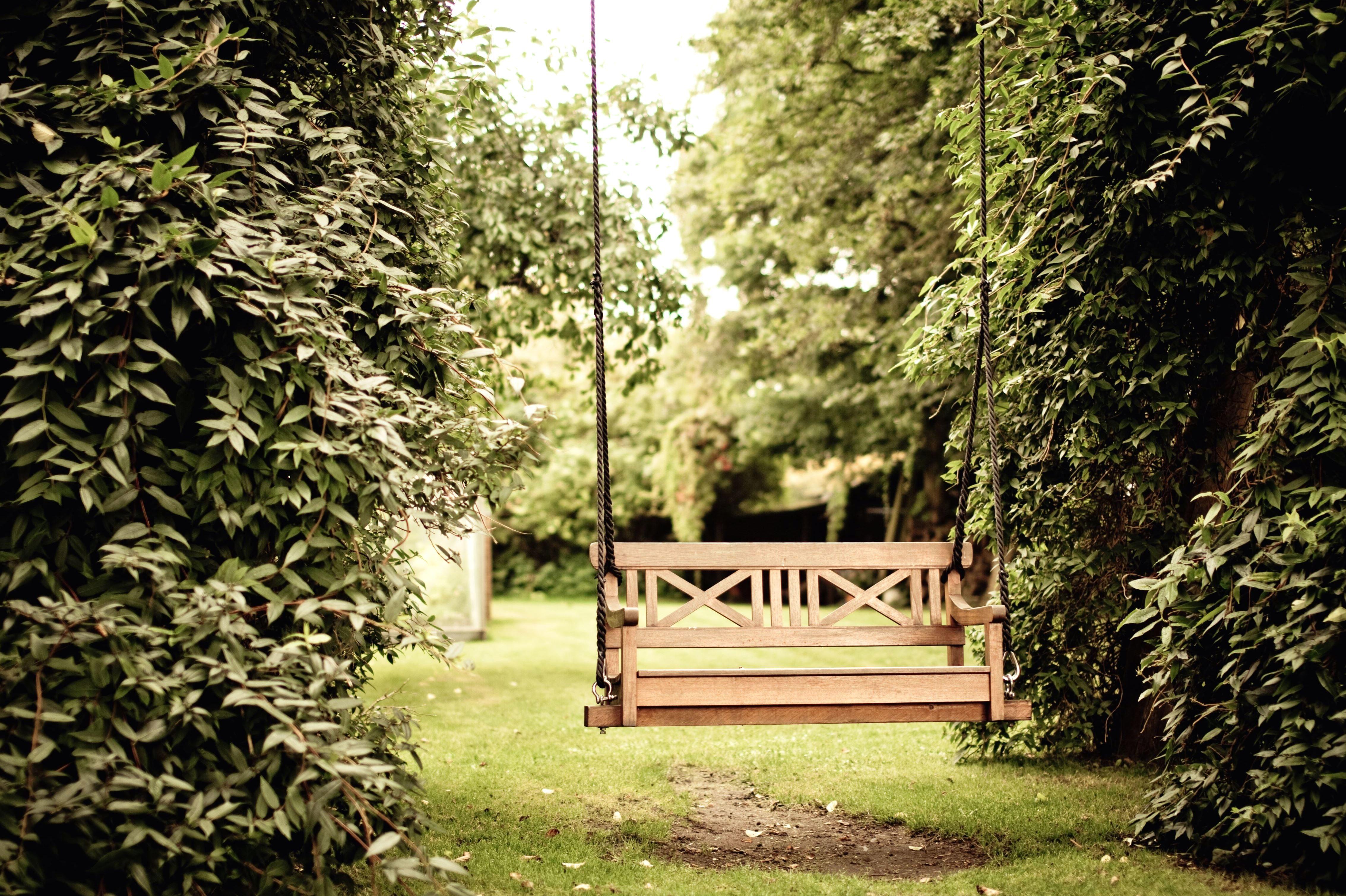 Image Libre Jardin Herbe Arbre Bois Arbres Balan 231 Oire