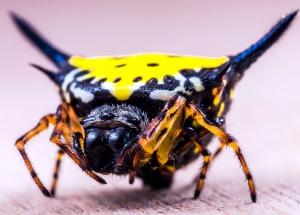 exotic spider, yellow spider