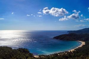 木、穏やかな海、海岸、空、木、水