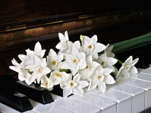 instrument, petals, flowers, white orchid, piano