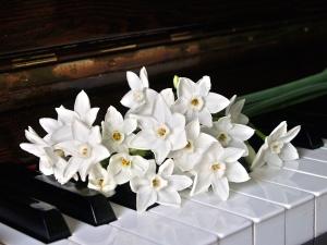 eszköz, szirmok, a virágok, a fehér orchidea, zongora