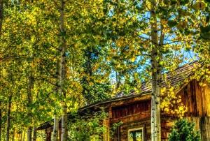 di legno, bosco, giallo, architettura, natura