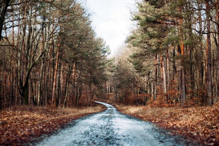 vackra landskap, skogsväg