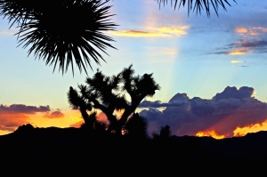 plants, silhouette, sunriset, trees