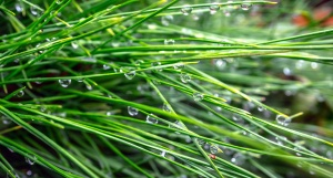 water, rain, raindrops, grass, green grass