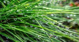 vode, kiša, kapljice kiše, trava, zelena trava