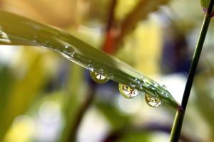 esőcseppek, víz, eső, kert, fű