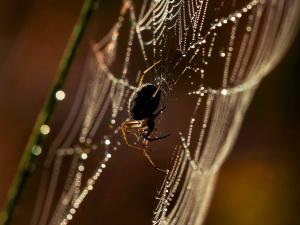 spider, spider web, insect, rain
