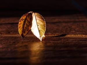 autumn leaves, shadow