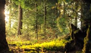 planter, søn, trær, skogen, miljø