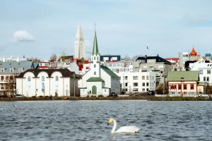 swan, town, water, animal, architecture, bird