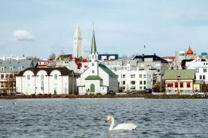 Swan, byen, vann, dyr, arkitektur, fugl