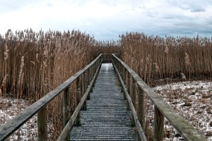 weather, winter, nature, landscape, environment
