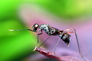 closeup, wasp insect, macro, beautiful, image