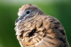 brown bird, animal