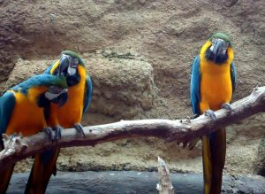 macaws папагали, птици