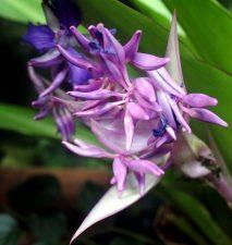 plant, purple petals, Eecuador