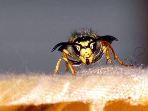 yellow insect, jacket, wasp insect