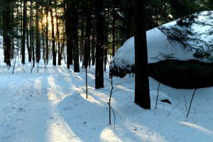 skogen, vinter, trær, natur, landskap, sollys, snø, vinter