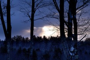 forest, nature, sunset, clouds, snow, trees, winter