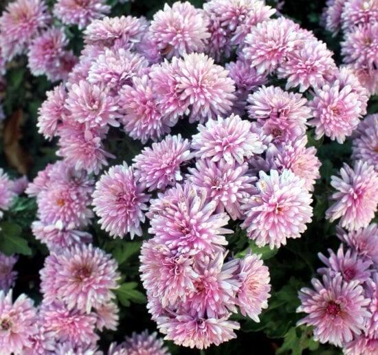 purple flower, flowers, bloom