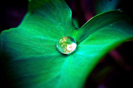 water, droplet, center, leaf