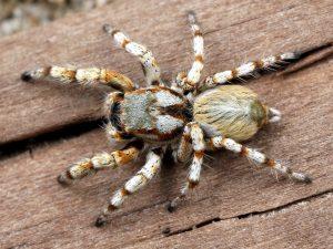 거 대 한 거미