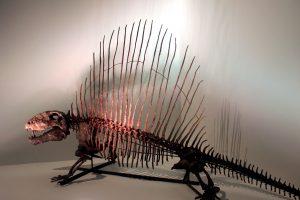 Dimetrodon, scheletro